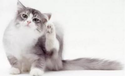 Как определить что у кота блохи